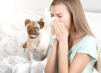woman sneezing with pug in background
